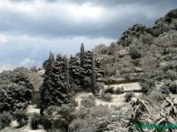 schnee-ueber-den-olivenbauemen